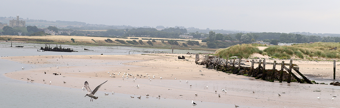 Coquet Estuary Birdwatching Sites