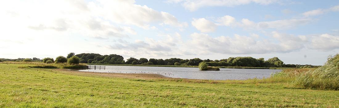 Holywell Pond NR - North-Tyneside